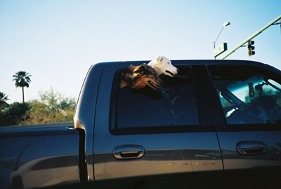 Arizona Truck dogs