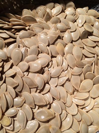 such luck seeds